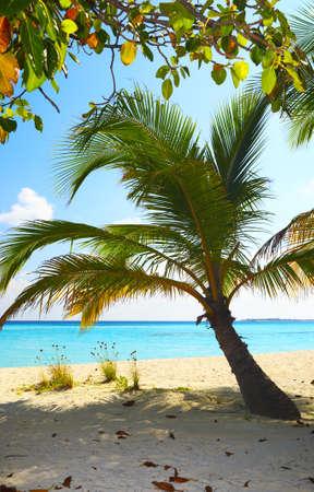 Coral beach on the island Kuredu in the Indian Ocean, Maldives Stock Photo - 13103042