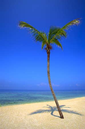 onbewoond: Enkele palmboom is op een onbewoond eiland