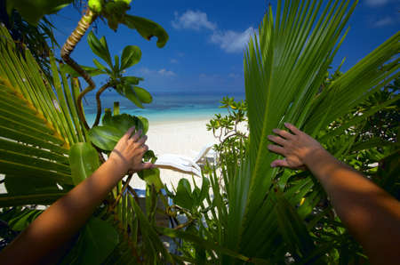 Paradise on an ocean island