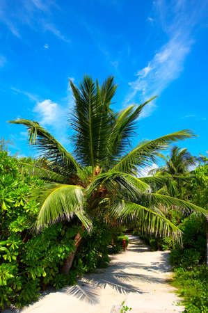 Sandy road in a tropical hotel, Maldives photo