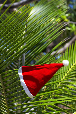 Christmas hat hang on a  branch on a palm tree  photo