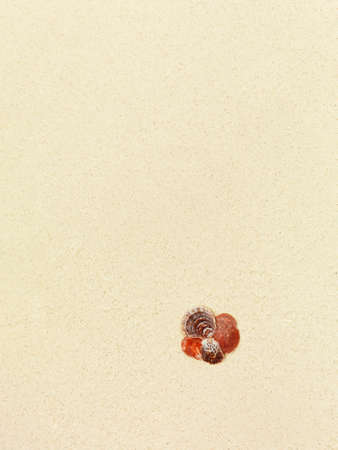 Character dot made of seashells on a coral sandy beach Stock Photo - 13122039