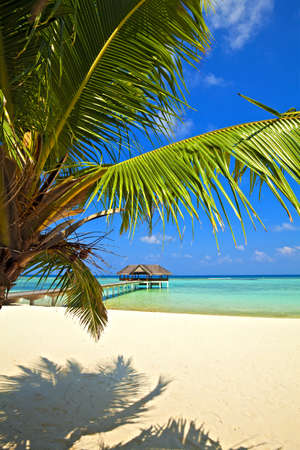 Nice tropical landscape, Maldives, The Indian Ocean Stock Photo - 13148294