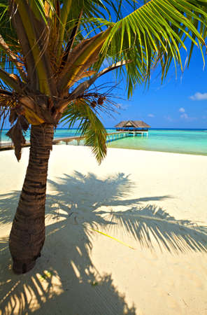 Nice tropical landscape, Maldives, The Indian Ocean Stock Photo - 13148212