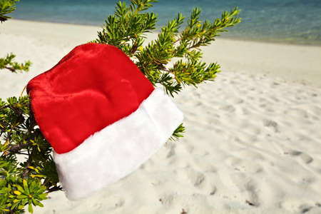 Christmas hat hang on a branch of tree Stock Photo - 13148203