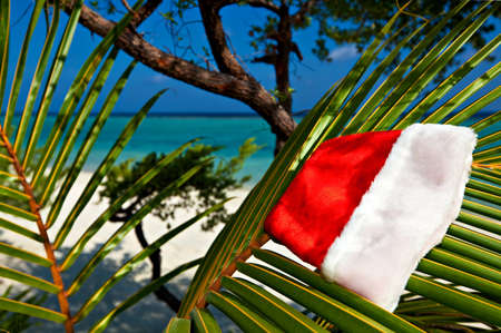 Christmas hat hang on a branch of palm tree Stock Photo - 13148214