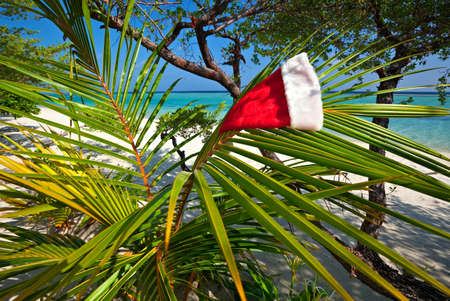 Christmas hat hang on a branch of palm tree photo