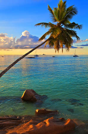 Excellent sunset view with a big stones and palmtrees, Seychelles, La Digue island photo