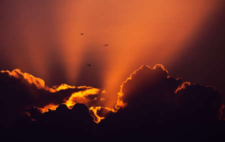 migrate: Three birds in a wonderful sunset sky