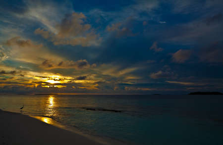 Nice Sunset in the Indian Ocean with a bird, Maldives Stock Photo - 13220043