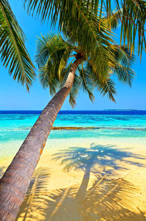 Tropical beach on the island Vilamendhoo in the Indian Ocean, Maldives Stock Photo - 16659287