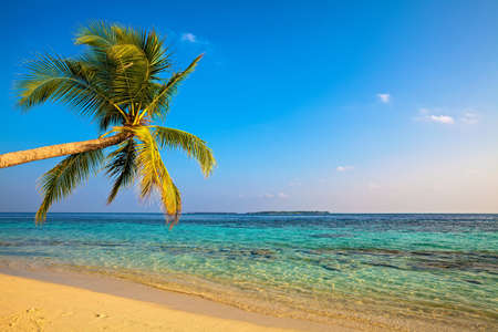Tropical beach on the island Vilamendhoo in the Indian Ocean, Maldives Stock Photo - 16659284