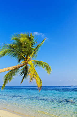 Tropical beach on the island Vilamendhoo in the Indian Ocean, Maldives Stock Photo - 16748014