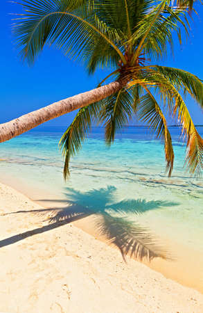 Tropical beach on the island Vilamendhoo in the Indian Ocean, Maldives Stock Photo - 16841671