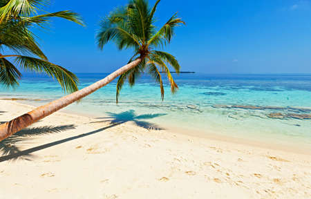 vilamendhoo: Tropical beach on the island Vilamendhoo in the Indian Ocean, Maldives Stock Photo