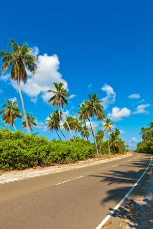 Tropical road with palmtrees on the island Gan in Indian Ocean, Maldives