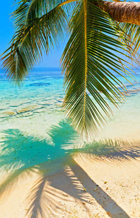 Tropical beach on the island Vilamendhoo in the Indian Ocean, Maldives Stock Photo - 16894923