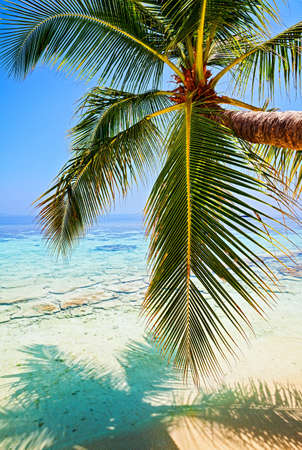 Tropical beach on the island Vilamendhoo in the Indian Ocean, Maldives Stock Photo - 16894925