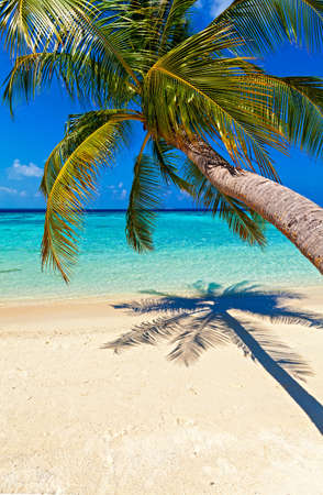 Tropical beach on the island Vilamendhoo in the Indian Ocean, Maldives Stock Photo - 17005140