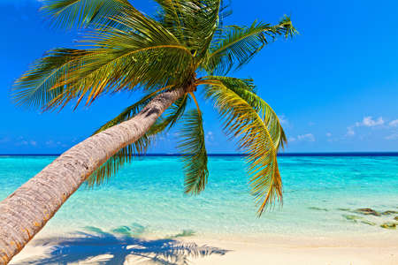Tropical beach on the island Vilamendhoo in the Indian Ocean, Maldives Stock Photo - 17005139