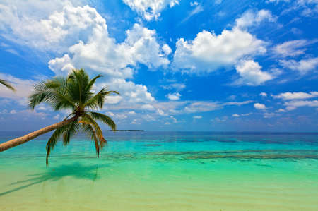 Tropical beach on the island Vilamendhoo in the Indian Ocean, Maldives Stock Photo - 17067462
