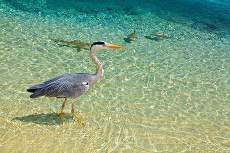 bird and baby sharks are near the ocean coast Stock Photo - 17067459