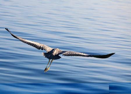 The Bird Stock Photo - 17067467