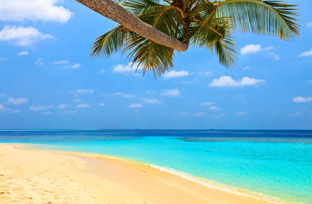 Beach for relax under the shade of a palm tree Stock Photo
