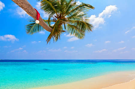 Santa hat is on palm tree,  Maldives, The Indian Ocean Stock Photo