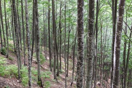 Texture forest Reklamní fotografie