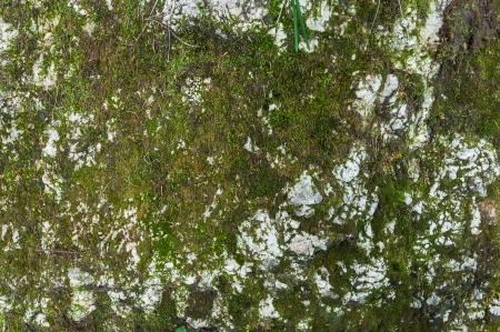 Texture rock with musk Reklamní fotografie