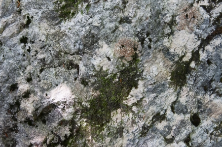 Texture rock with musk Stock Photo