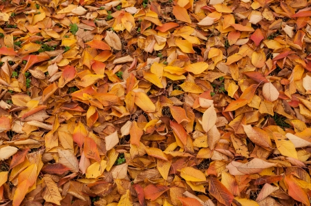 Texture leaves autumn falls