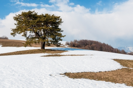 Isolated tree on hill with snow Stock Photo
