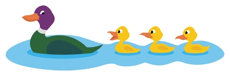 Mother duck, swimming with her three little ducklings.   No transparency and gradients used in the vector file. Vector