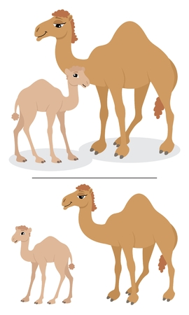 hump: Baby camel and his mother. Below are the same camels, separated and looking at you.  No transparency and gradients used.