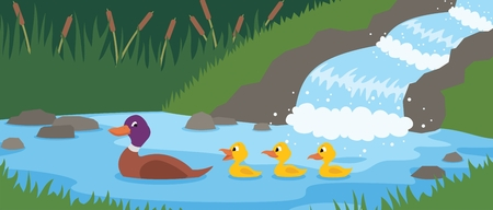 Mother duck is swimming with her three little ducklings near by a forest stream.   No transparency and gradients used in the vector file.