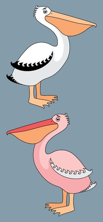 animal pouch: Two breeds of pelicans � white and pink. No transparency and gradients used. Illustration