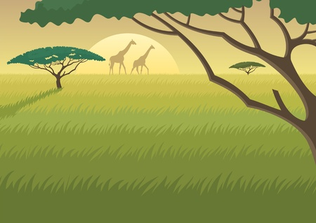 africa safari: Landscape of the African Savannah at duskdawn  Illustration