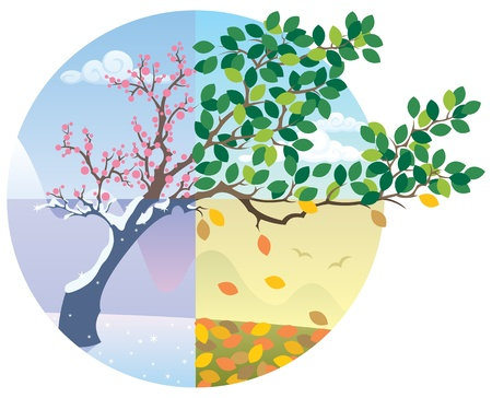 Cartoon illustration representing the cycle of the four seasons. No transparency used. Basic (linear) gradients.