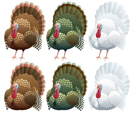 Illustration of a turkey in 2 positions and 3 color variations.  No transparency used. Basic (linear) gradients.