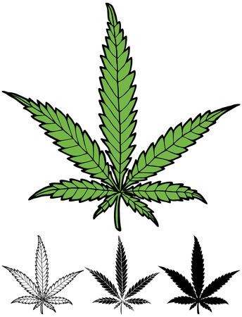 cannabis sativa: Hand drawn hemp leaf in 4 versions, including silhouette