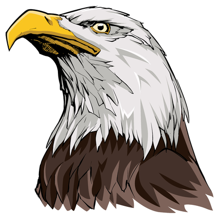 Portrait illustration of North American Bald Eagle. Illustration