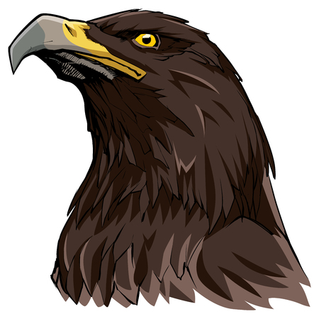 Hand drawn illustration of a Golden Eagle.