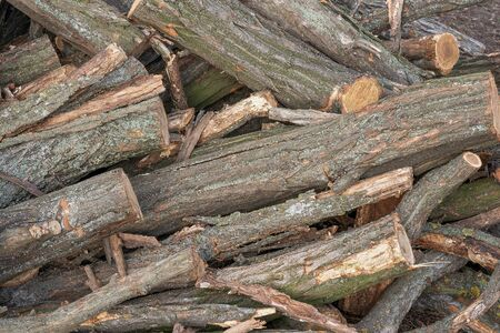 Sawn trees and folded in a pile. Piled logs. Texture, background. 写真素材