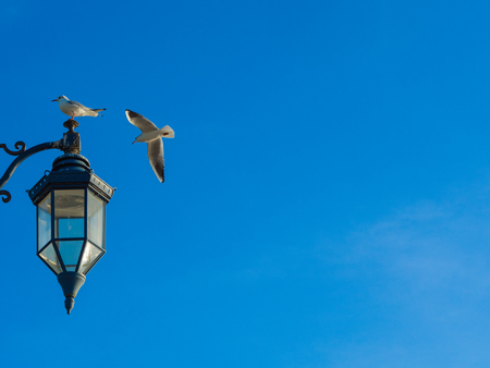 Vintage Lamp at Southsea, Portsmouth, clear blue sky, seagull landing Stock Photo