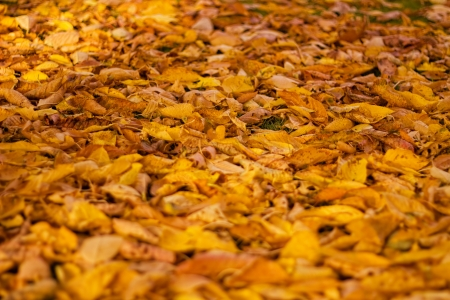 transient: The picture shows colorful leaves.