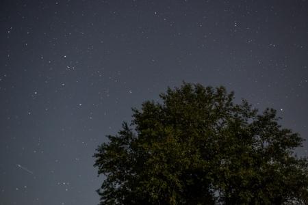 sterrenhemel: Het beeld toont een boom onder een heldere sterrenhemel