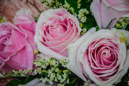 Pink roses bouquet closed up background