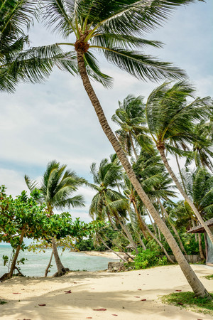 Coconut trees leaning into the wind by the beach under summer blue sky background. Summer beach holiday icon.